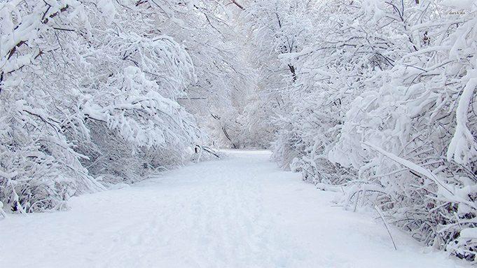 An empty snowy road